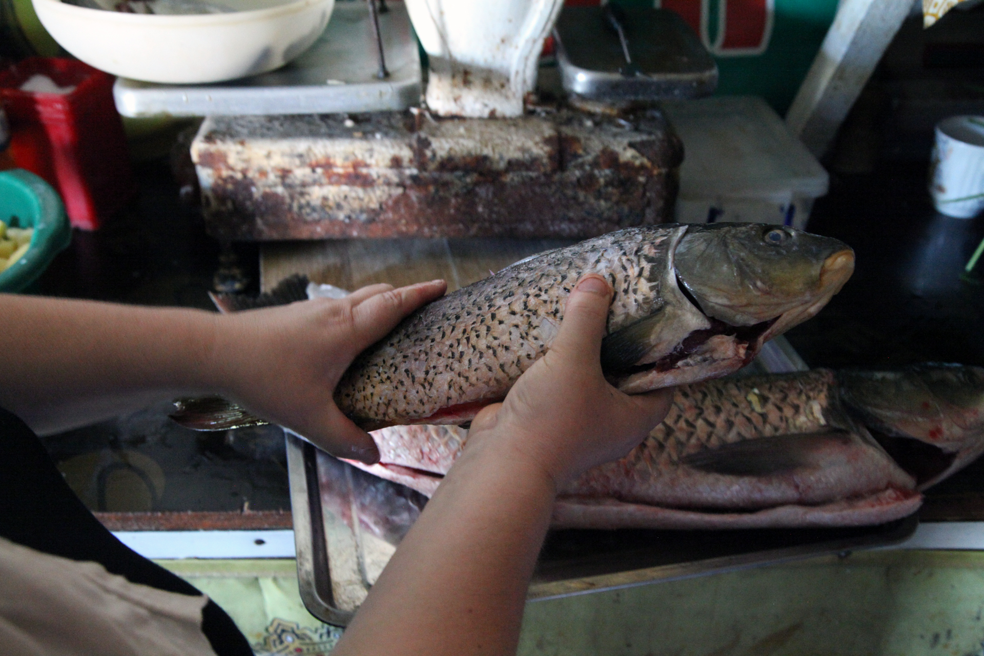 FISH1large